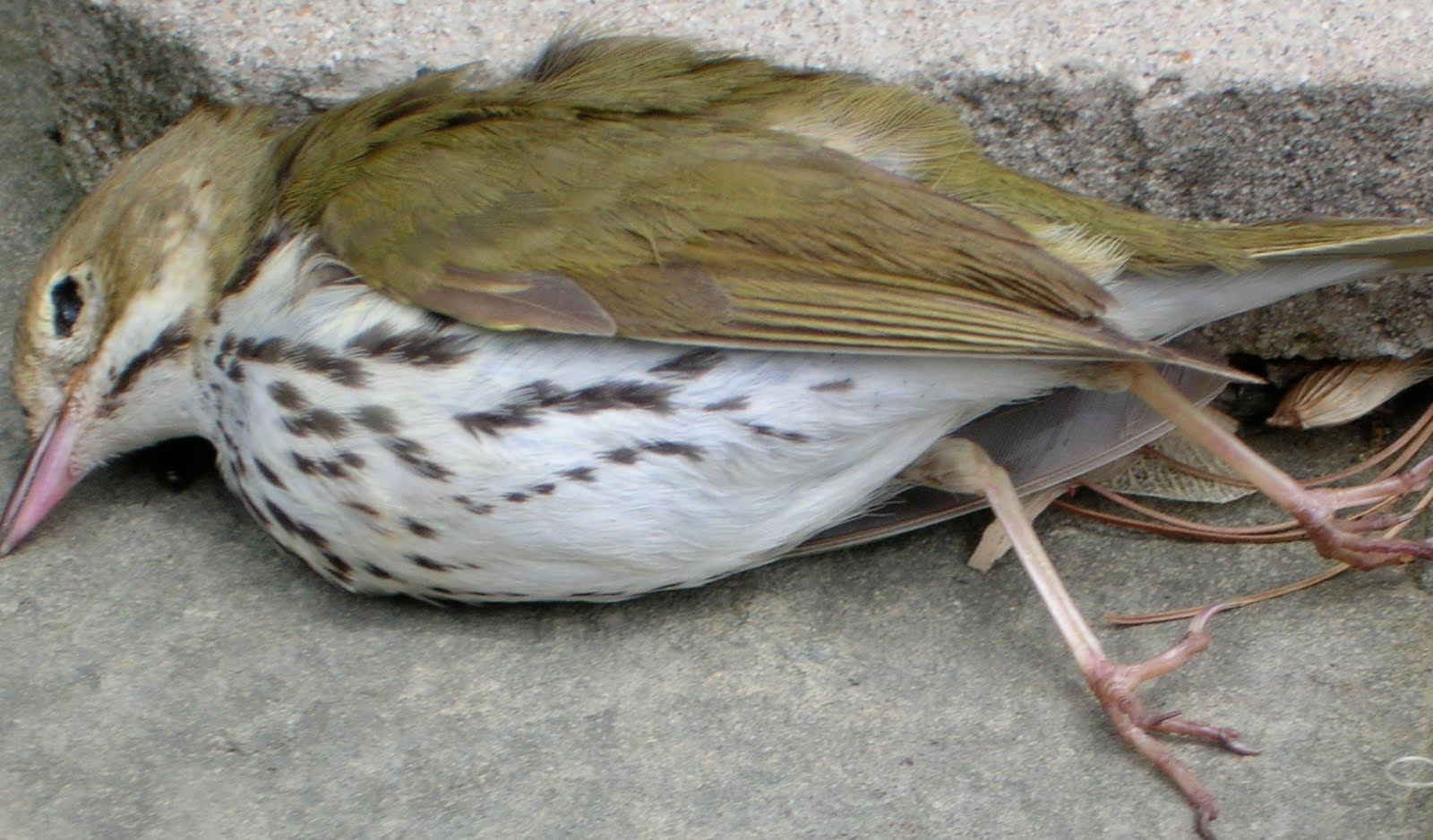 how to tell if a bird is dying