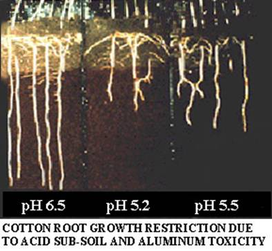 The availability of nutrients is effected by the pH of a soil.