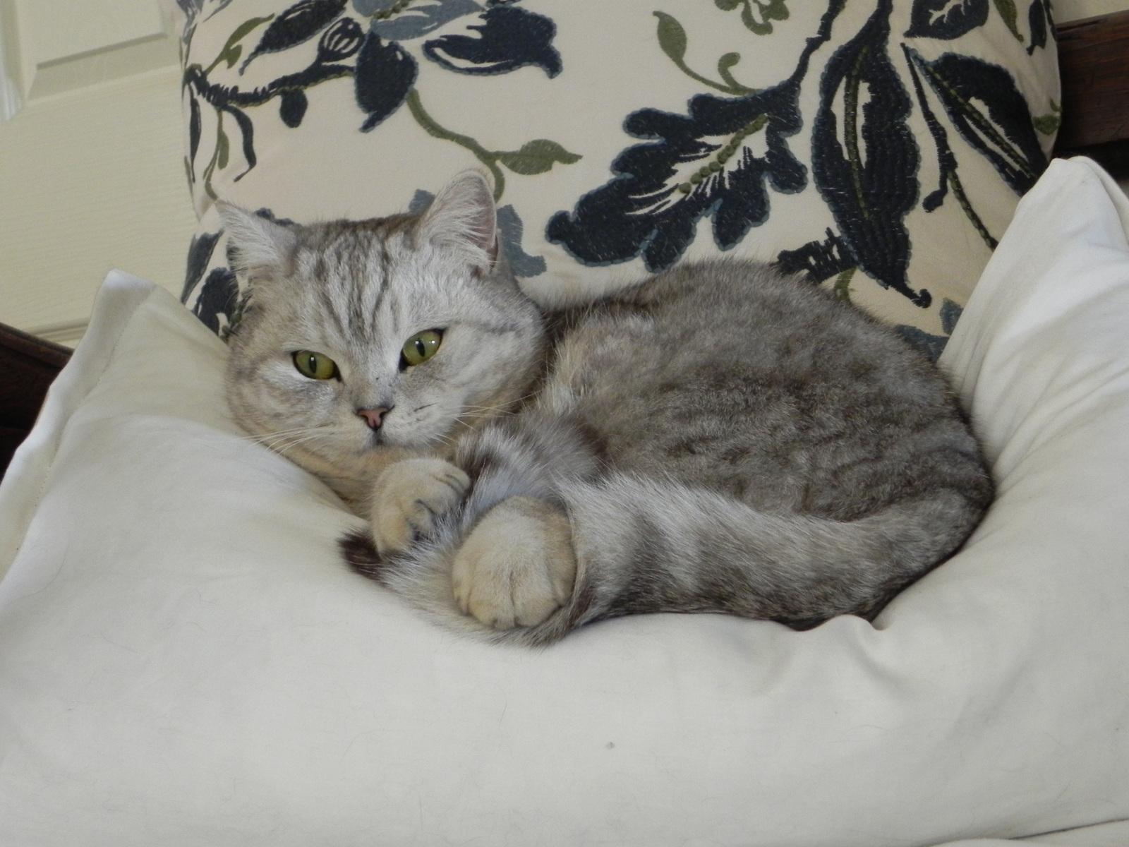 Evo Food Cat Kidney Care