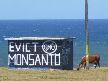 The pillbox mural at Ho'okipa (on the road from Paia to Haiku) got another paint job. This time, to evict Monsanto, which has a huge presence on Maui and throughout Hawaii with fields of GMO crops. There's a lot of anti GMO- activism on Maui!!!
