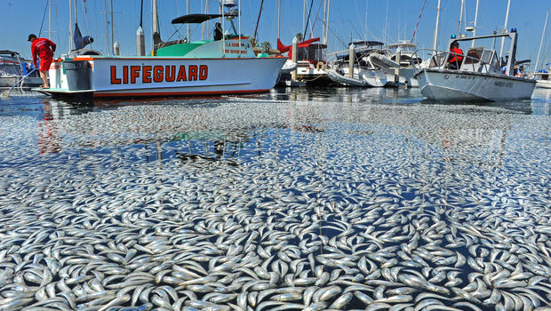 http://www.thetruthdenied.com/news/wp-content/uploads/2015/02/dead-fish-the-truth-denied.jpg